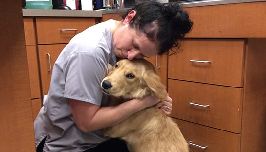 Vet hugging a dog: AAHA-Accredited in Melrose