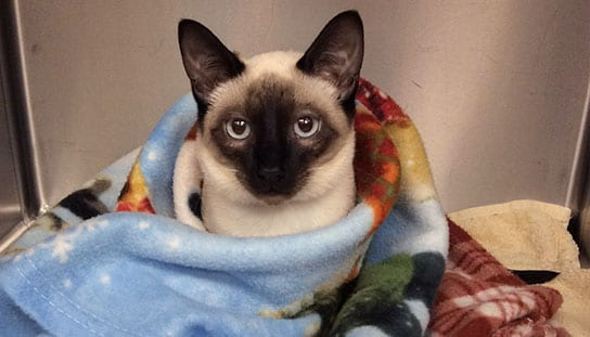 Cat wrapped in a blanket: Cat Friendly in Melrose