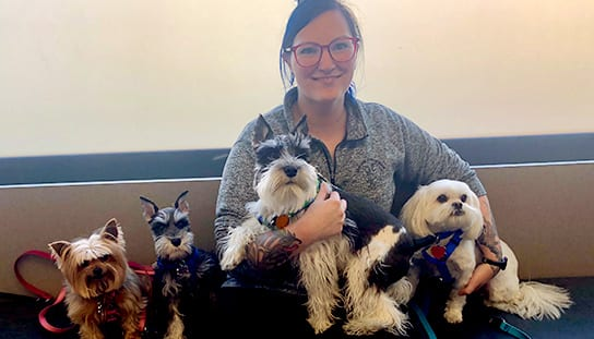 Dogs with staff: Veterinarian in Melrose