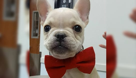 Dog wearing a bowtie: Rebates in Melrose