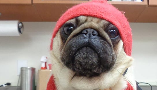 Dog wearing a beanie: Rebates in Melrose