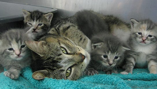 Cat with kittens: Frequently Asked Questions in Melrose